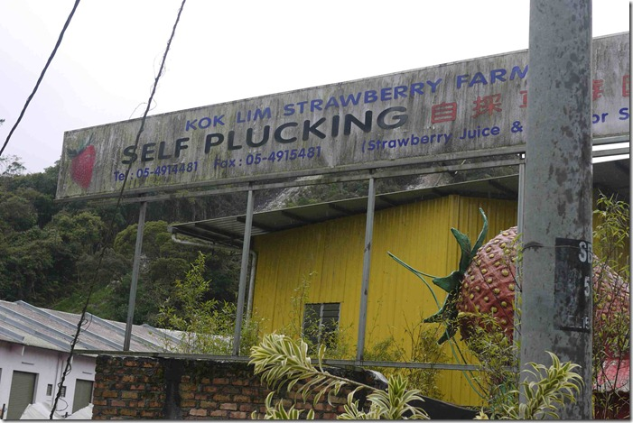 Kok Lim Strawberry Farm, Cameron Highlands
