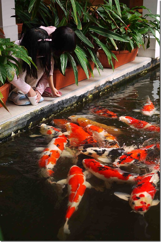 Children feeding koi - Cameron Highland Resorts