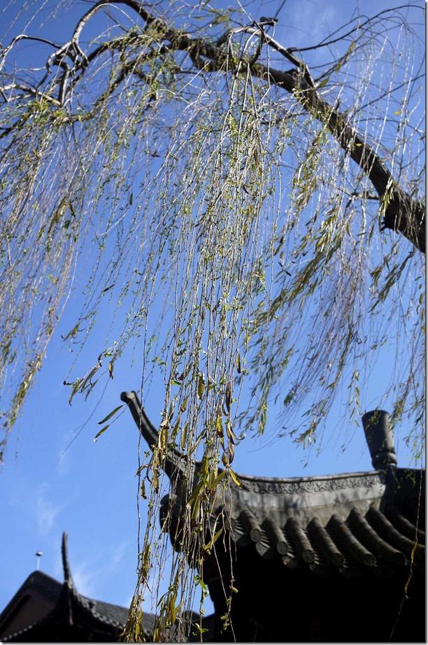 Chinese Gardens of Friendship, Sydney