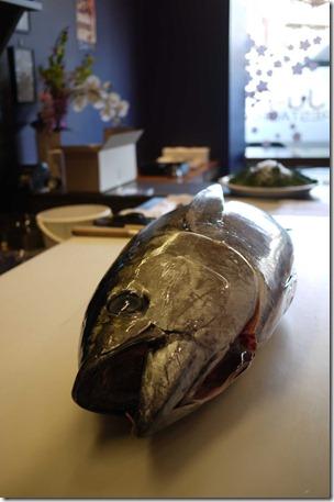 50kg Bluefin tuna