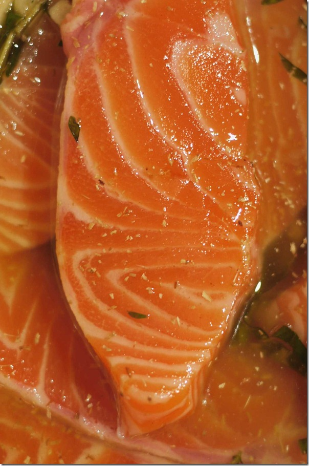 Ocean trout marinating in grape seed oil, EVOO, coriander powder, white pepper, basil and thyme