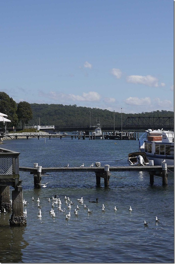 Sea gulls at a jetty, Bateman's Bay
