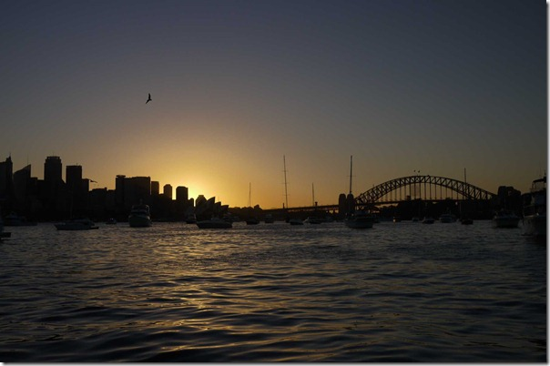 A lone seagull flying home at twilight, Sydney harbour