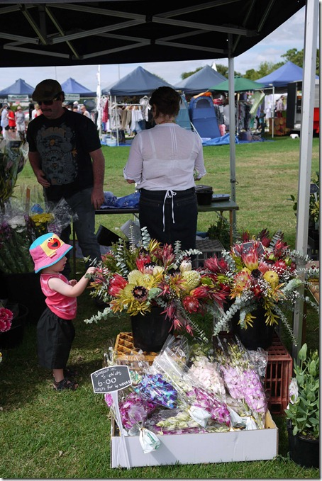 Fresh native flowers, Moruya markets