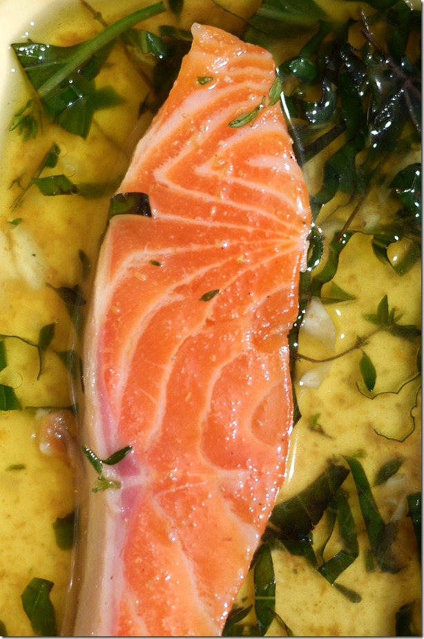 Tetsuya at home: Ocean trout marinating in grape seed oil, EVOO, coriander powder, pepper, basil and thyme