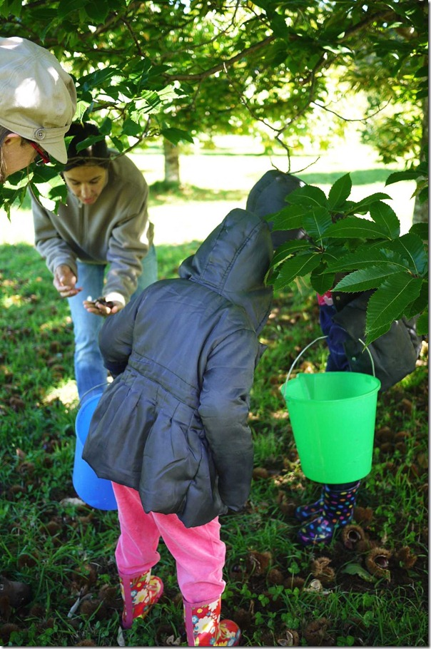 A family affair: Children should be supervised when picking chestnuts