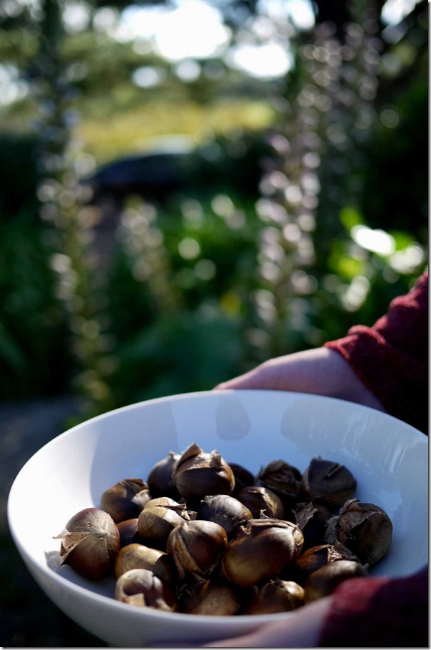 The fruits of our labour ~ roasted chestnuts on a beautiful farm