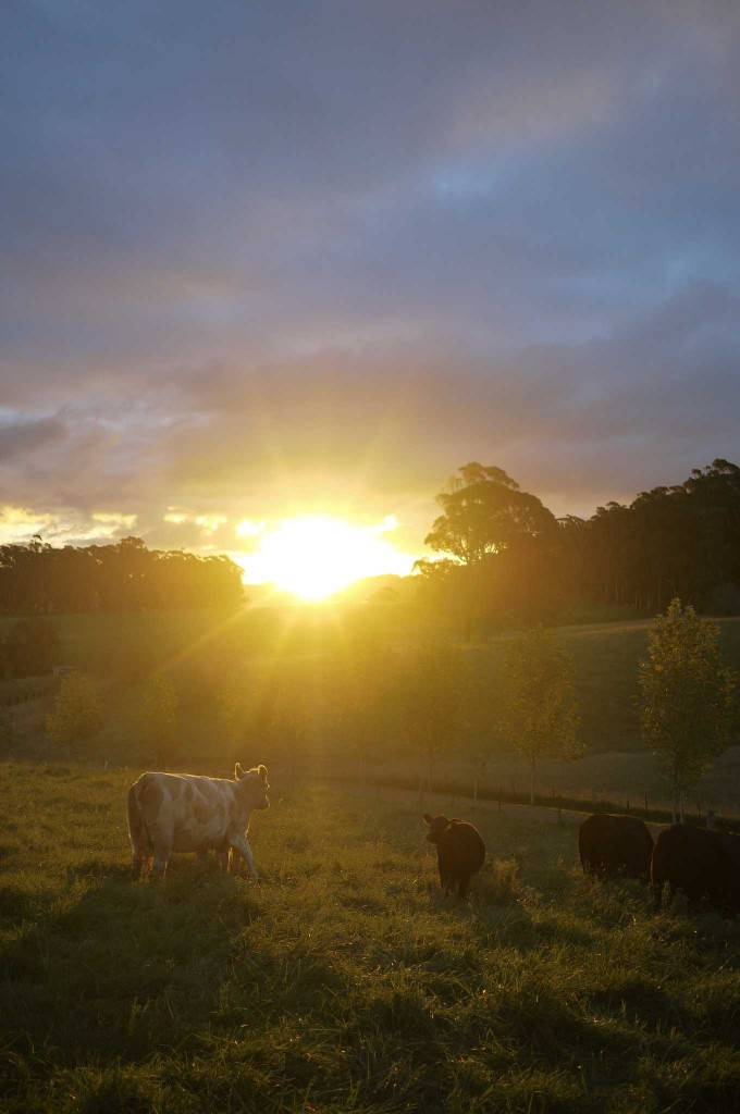 Sunset by Hatch Cottage, Moss Vale, Southern Highlands
