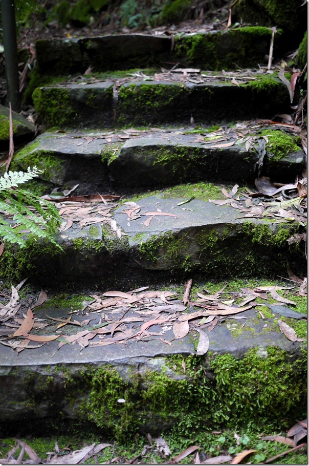One step at a time, Mount Tomah Botanic Garden