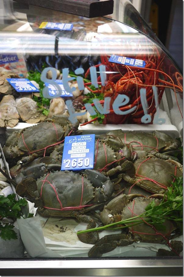 Live mud crabs