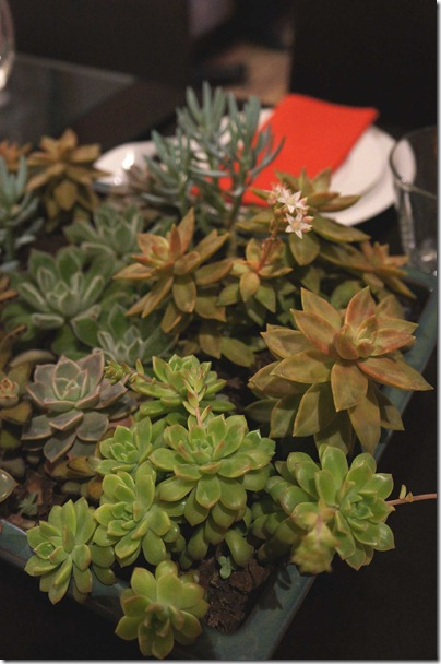 Succulents on our dining table