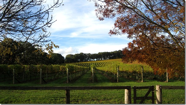 Centennial Vineyards, Bowral, Southern Highlands