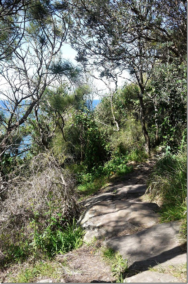 Bushwalking trail at Dee Why