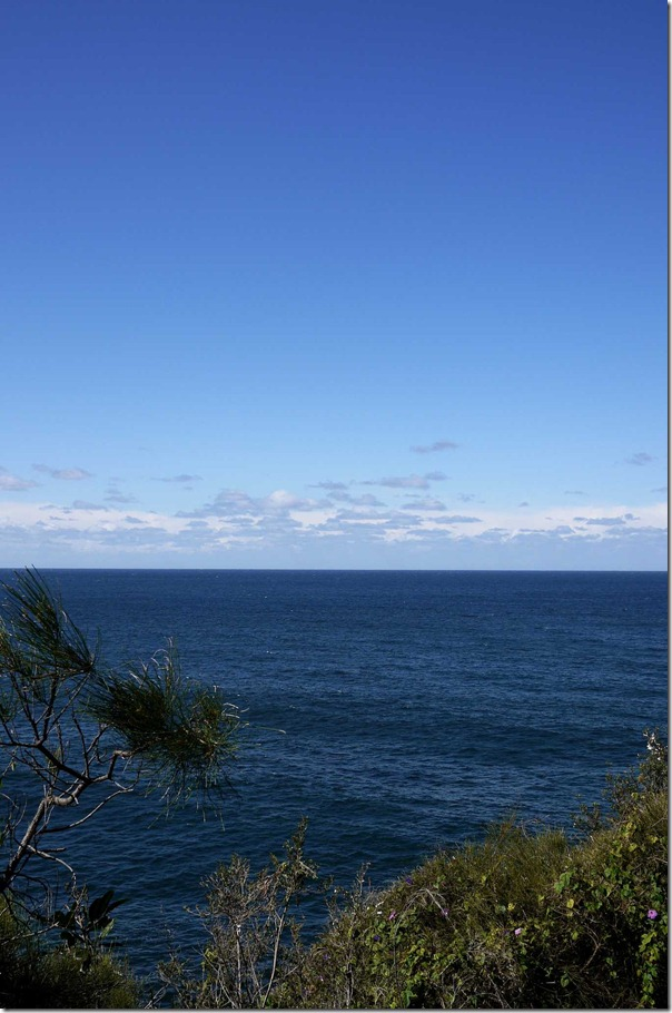 View of the Tasman Sea and beyond from a cliff top at Dee Why