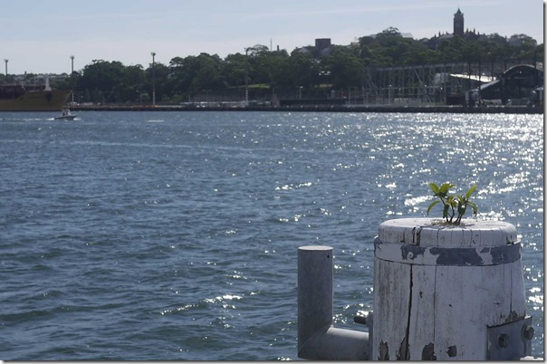 View of Johnston Bay from Jones Bay Wharf. Pyrmont