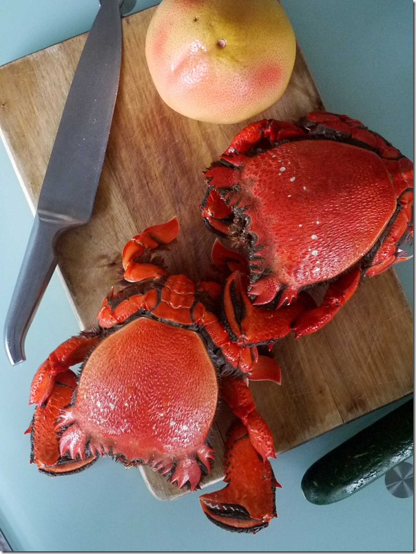 Cooked spanner crabs from Sydney Fish Market