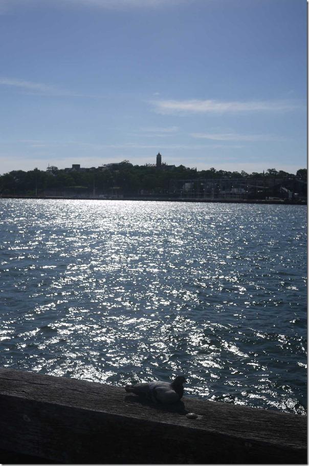 Pigeon basking in the sun, Jones Bay Wharf