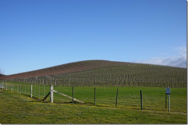 Vineyards at De Bortoli Wines, Yarra Valley