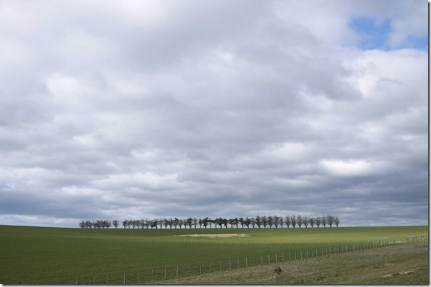 Line of trees in the distance, Melba Highway, Yarra Valley