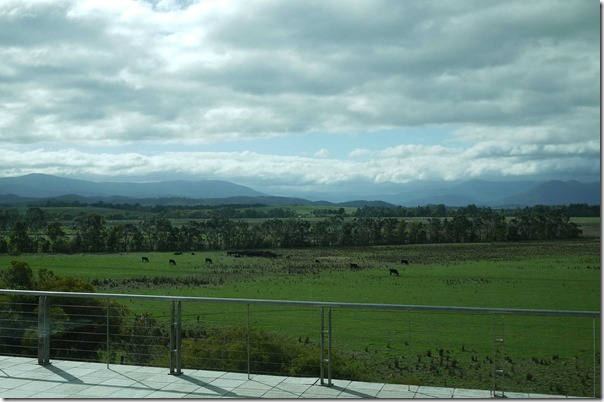 View from Wine Bar Restaurant, Yering Station winery, Yarra Valley
