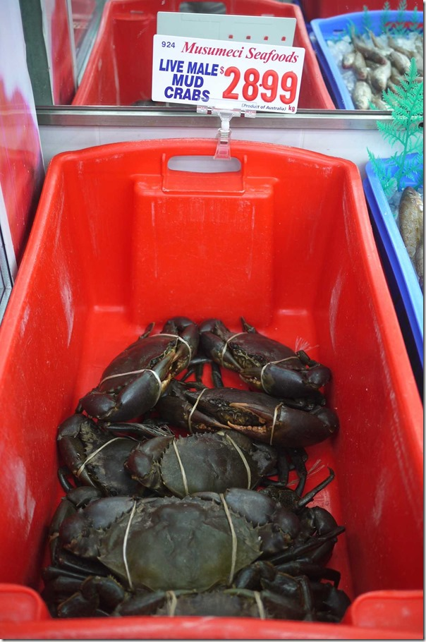 Live male mud crabs $28.99/kg