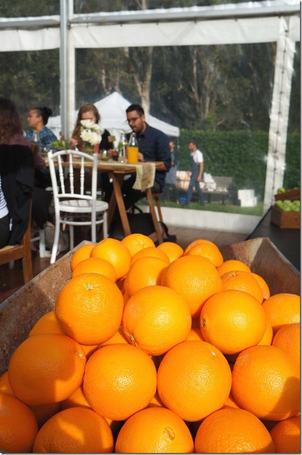 Oranges at breakfast with Bill Granger, Cook Community Garden, Waterloo