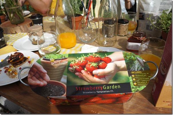 Mini strawberry garden