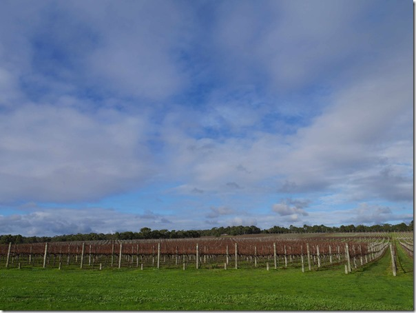 Yabby Lake vineyard, Mornington Peninsula, Victoria