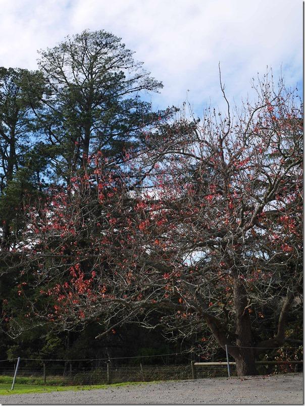The colours of winter at Dromana Estate, Tuerong, Mornington Peninsula