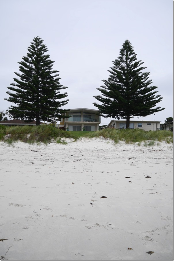 Beach houses and pine trees on Callala Beach, Jervis Bay