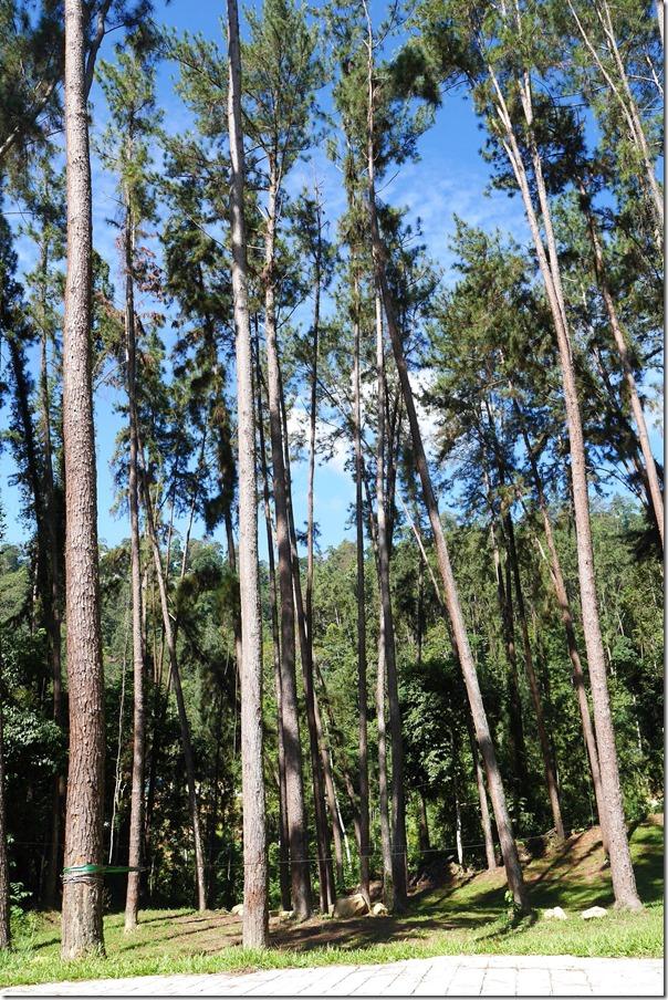 Tall trees loom over the backyard