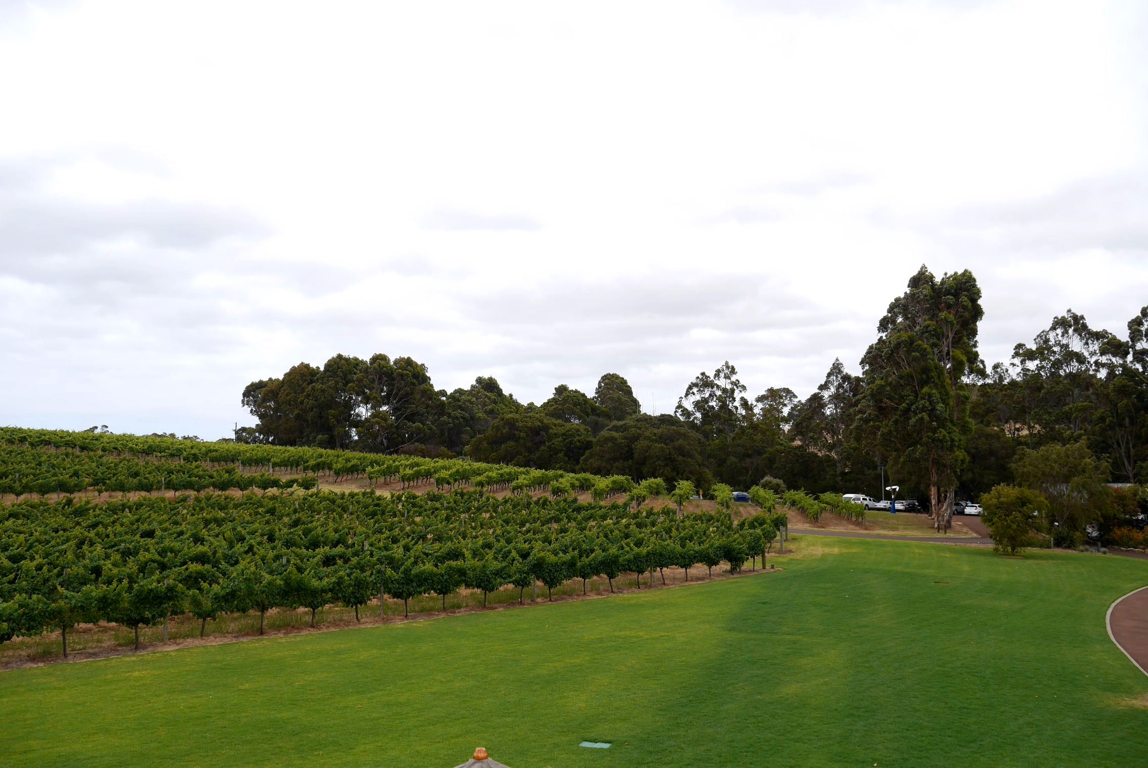 Vineyards and sprawling greens, Vasse Felix, Margaret River