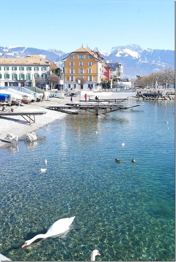 Swans along the banks of Lake Geneva