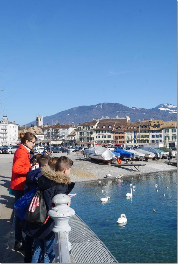 Swans and ducks along the banks of Lake Geneva
