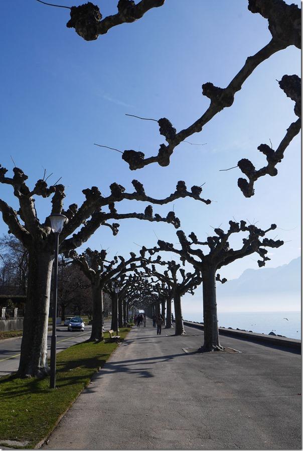 Trees along Quai Roussy
