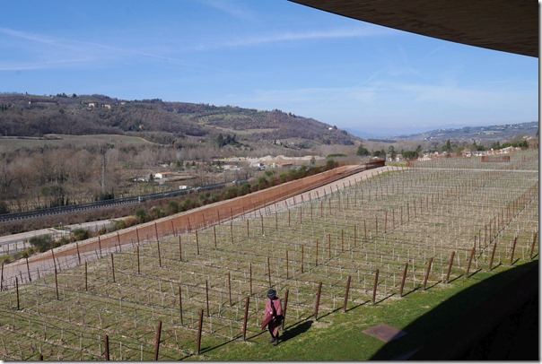 View of Antinori vineyards from the spiral staircase