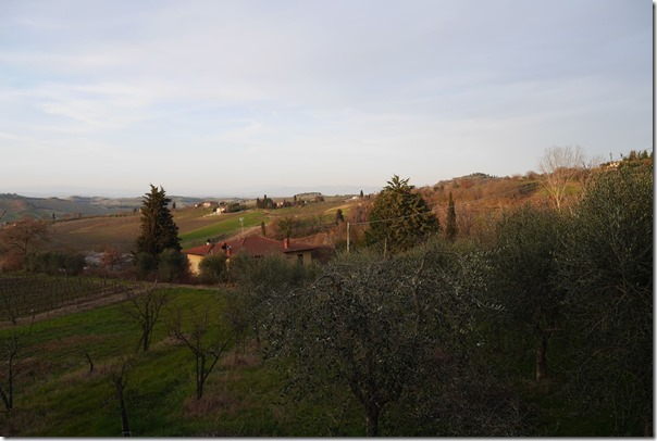 View of olive groves and vineyards from the farmhouse